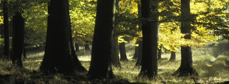 Titel_Wald